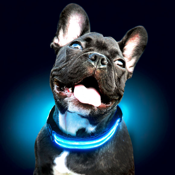 LED Glow Dog Collar
