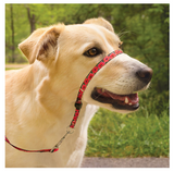 Petsafe Chic Gentle Leader Quick Release Poppies Headcollar and Leash for Dogs