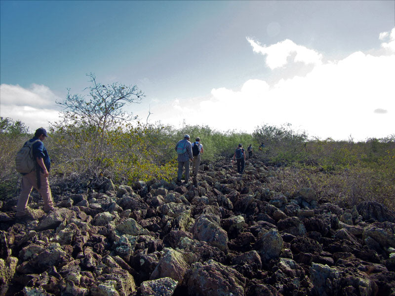 Tortoises of Española island, Galapagos: The survivors