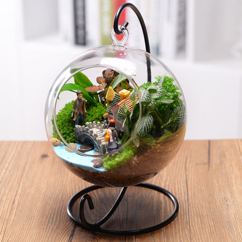 Clear Round Glass Vase Hanging Terrarium