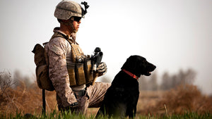 Military dogs have a long history of saving U.S. lives in war zones. Pictured here are Marine Lance Cpl. Nick Lacarra, and Coot, an IED detection dog, on patrol in Afghanistan in 2012.