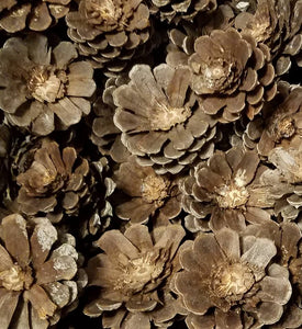 Imperfect Pine cone Zinnia Pine Cone Flowers 10pcs Crafting cones discounted