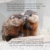 Groundhog Secrets, Everything You Always Wanted To Know About Woodchucks (Written by Lieve Snellings)