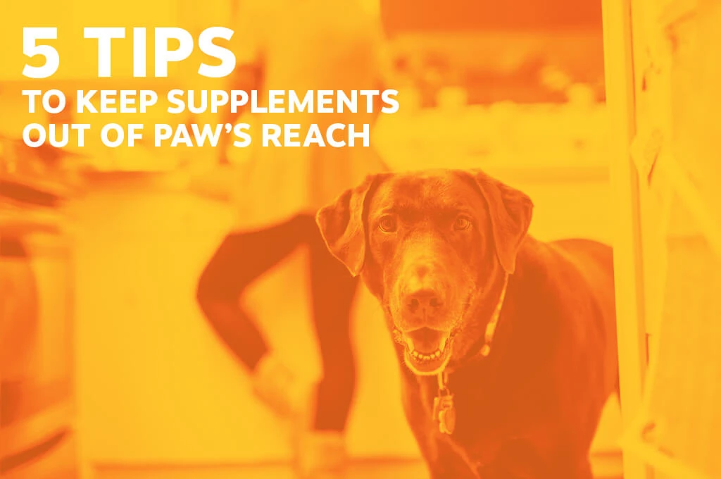 5 Tips to Keep Supplements Out of Paw's Reach