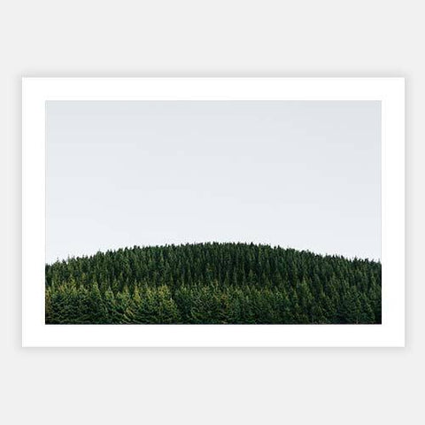 Trees Two by Matt Johnson - FINEPRINT co