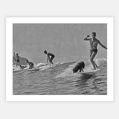 Surfing With Dog by FINEPRINT co - FINEPRINT co