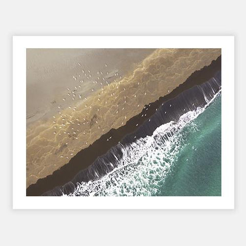 Aerial view Arctic terns by Getty Images - FINEPRINT co