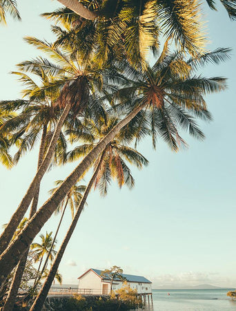 Port Douglas Palm-Open Edition Prints-Fine art print from FINEPRINT co