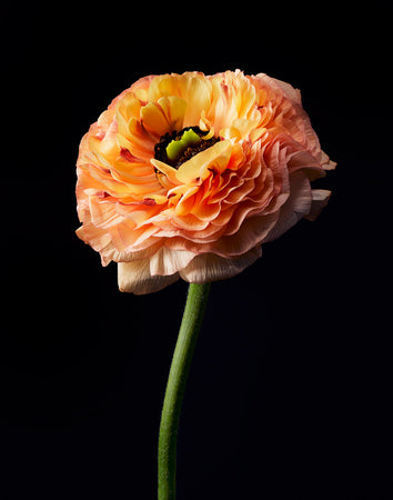 Orange Flower-Gallery Stock-Fine art print from FINEPRINT co