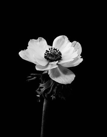 Black and white flower 2