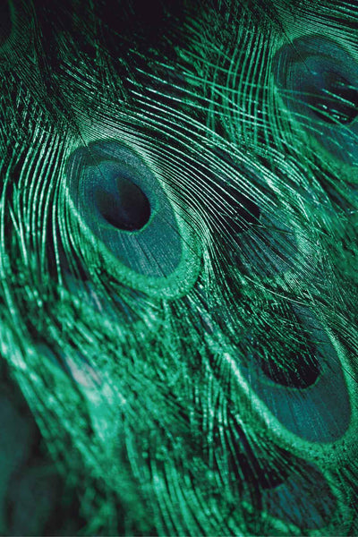 emerald-feathers-3 by FINEPRINT co - FINEPRINT co