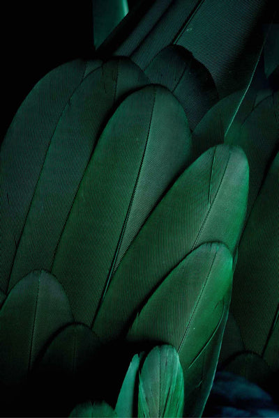 emerald-feather-2