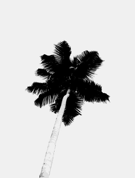 bw-palm-tree by FINEPRINT co - FINEPRINT co