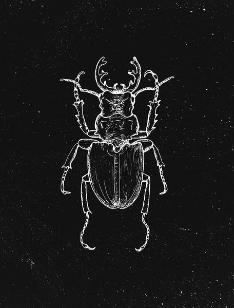 beetle by FINEPRINT co - FINEPRINT co