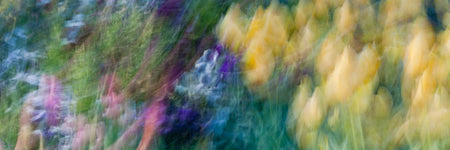 Blurred Tulips by Ross Spencer - FINEPRINT co