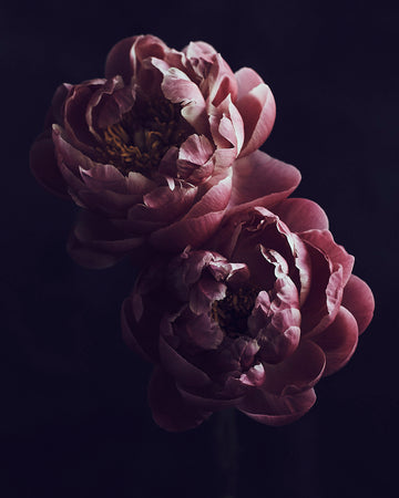 In Full Bloom-Vogue Contemporary-Fine art print from FINEPRINT co
