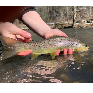Mossy Creek Fly Fishing Forecast 3/1/2021