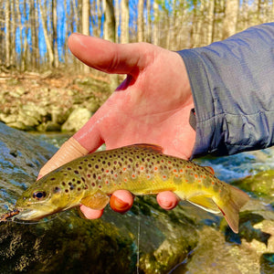 Mossy Creek Fly Fishing Forecast 1/4/2021