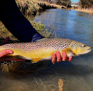 Mossy Creek Fly Fishing Forecast 3/15/2021