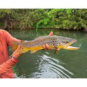 Mossy Creek Fly Fishing Forecast 5/3/2021