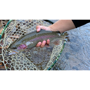 Mossy Creek Fly Fishing Forecast 11/23/2020