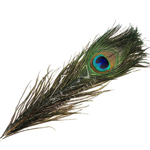 Peacock Eyes - Mossy Creek Fly Fishing