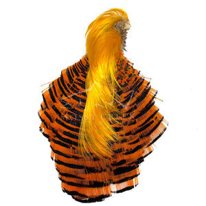Golden Pheasant Complete Head