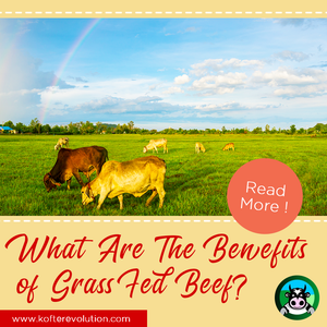 What Are The Benefits of Grass-Fed Beef?
