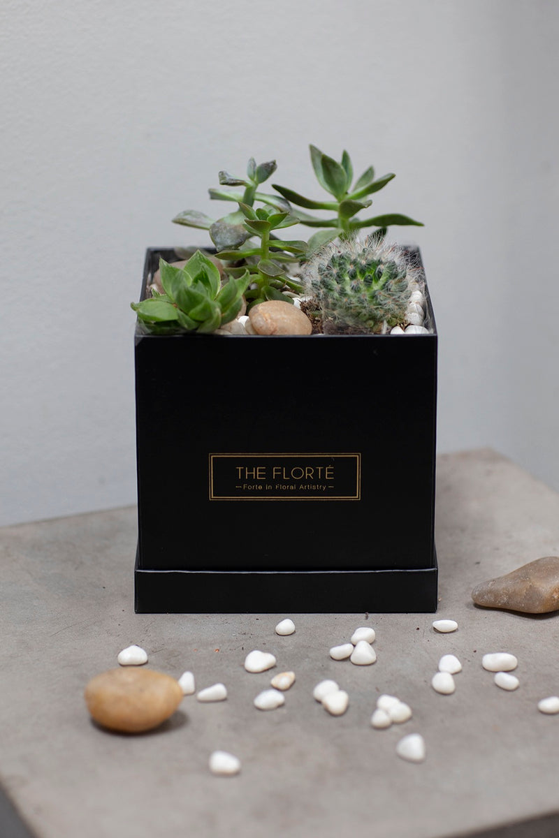 Stone Edge, Bloom Box