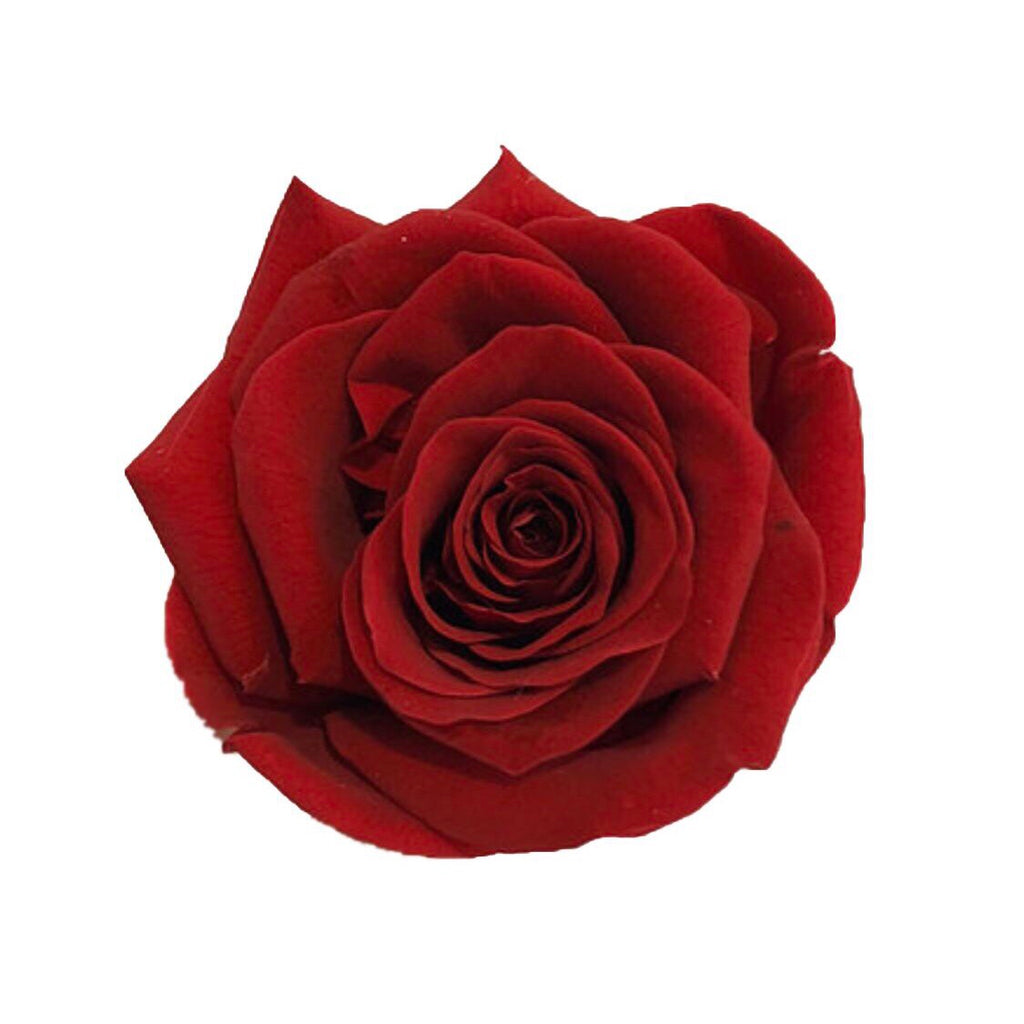 The Florté | Eternity Rosses Only, Square Bloom Box, 9 Roses, Red, White, Cream, Pink, Purple, Blue, Preserved Rose, Forever Roses, Everlasting Roses