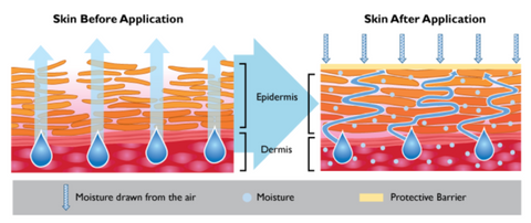 Skin Barrier Effect of Emolients