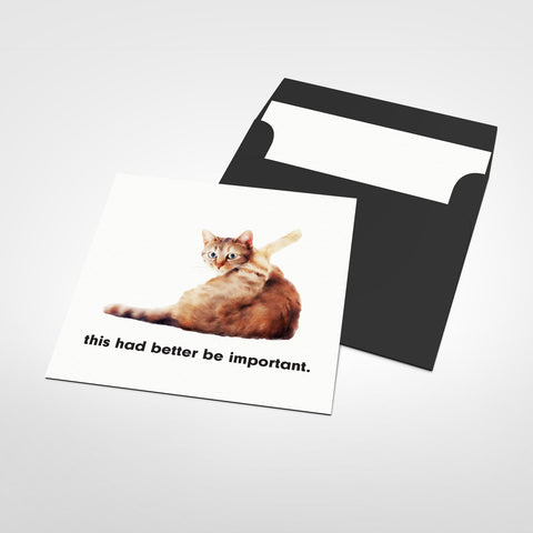 Better Be Important Cat Blank Greeting Card