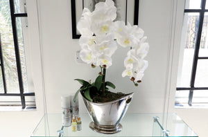 CHAMPAGNE ORCHID PLANTER 2.0