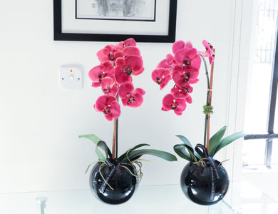 PINK ORCHID DISPLAY