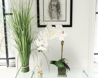 SINGLE  PHALAENOPSIS ORCHID DISPLAY