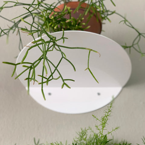 dot shelf white