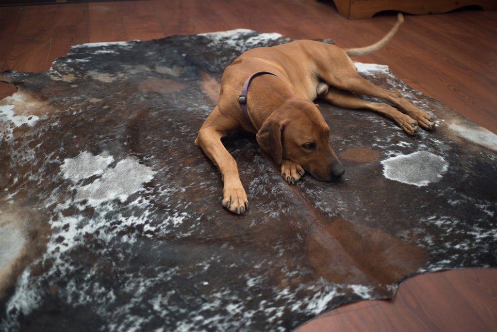 How To Clean Your Cowhide Rug The Nguni Guy