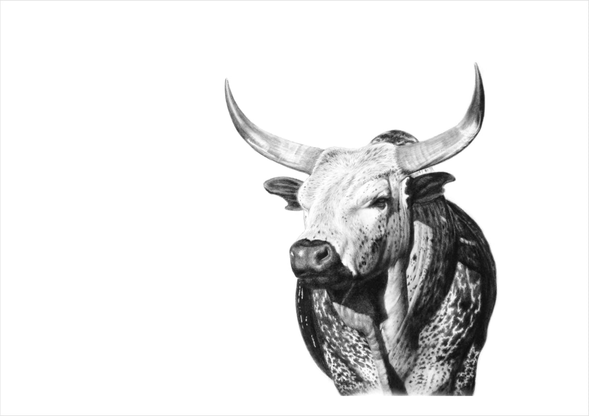 'Tusk The Bull' Vincent Reid Limited Print