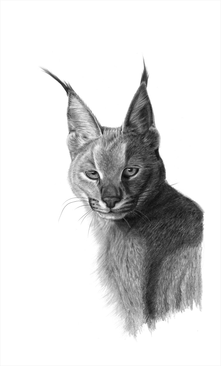 'Caracal' Vincent Reid Limited Print