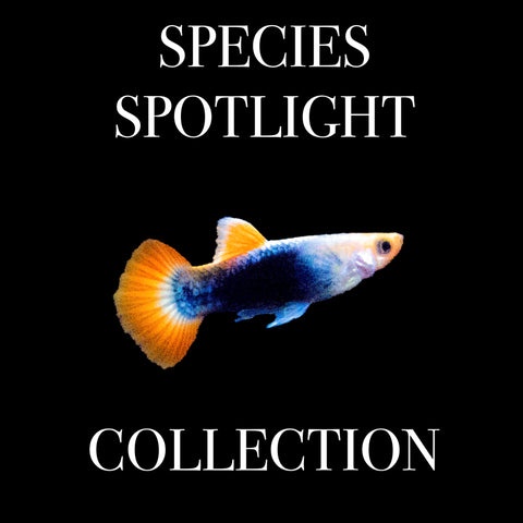 Species Spotlight Collection