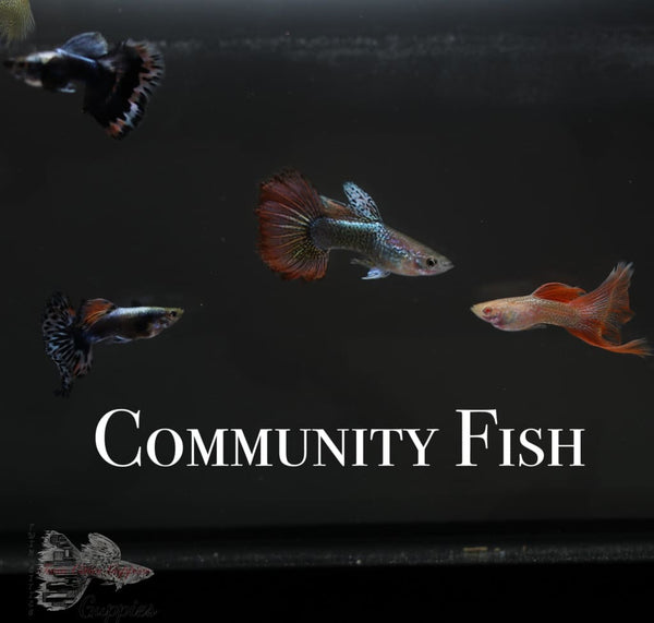 Community Fish Pack