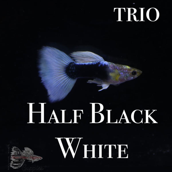 Half Black White TRIO