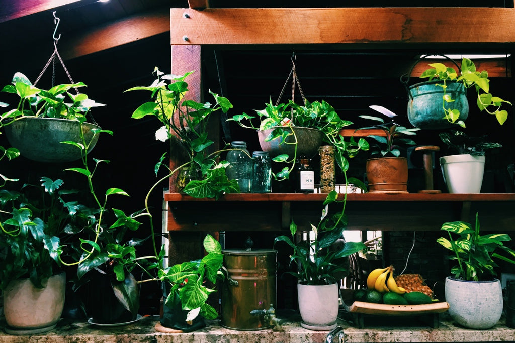 Why You Need Indoor Plants In Your Home