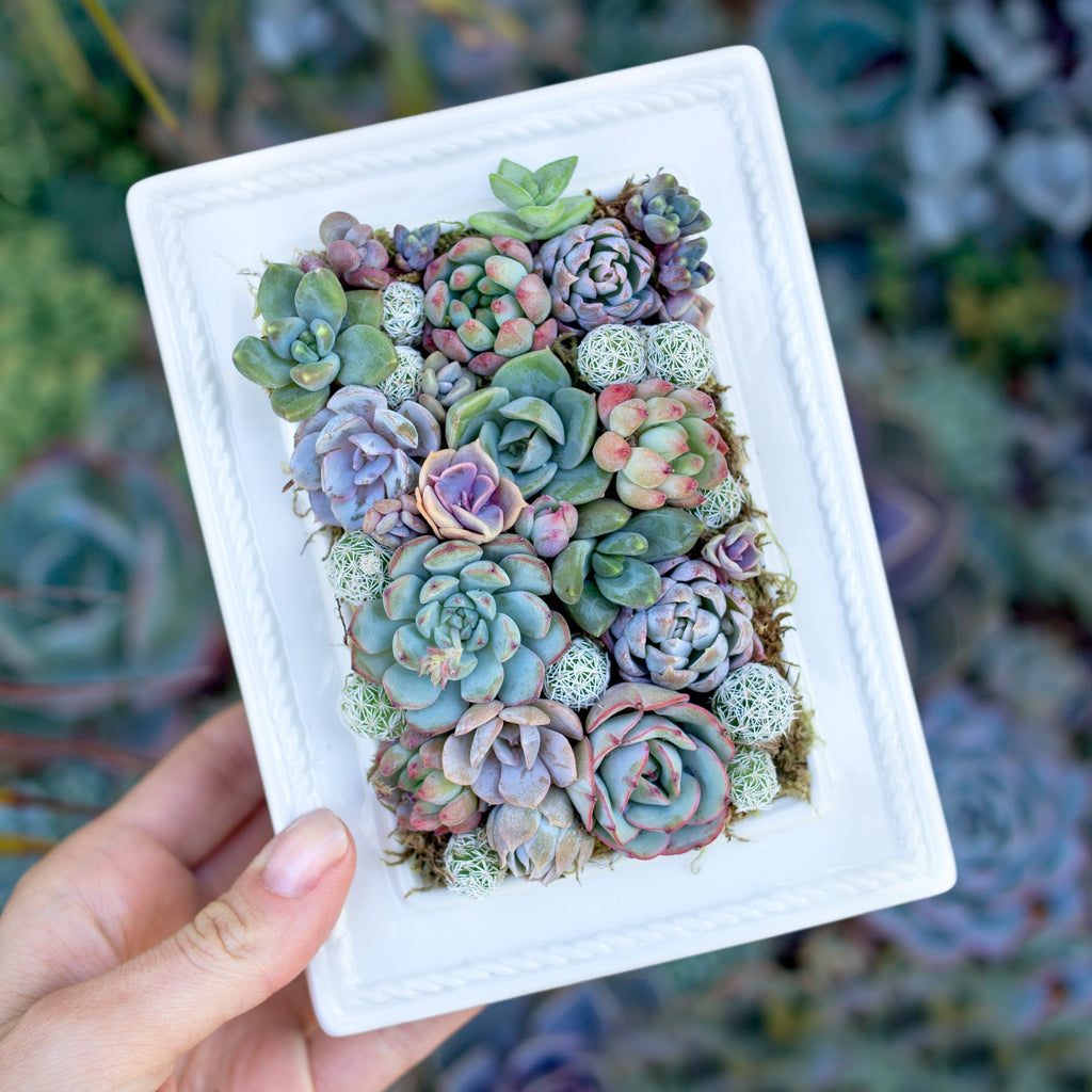 Plant Your Own Succulent Picture Frame