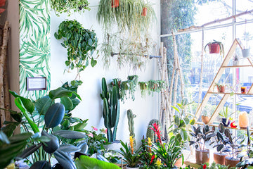 Wildflora - An Adorable Plant & Floral Shop in Studio City, CA