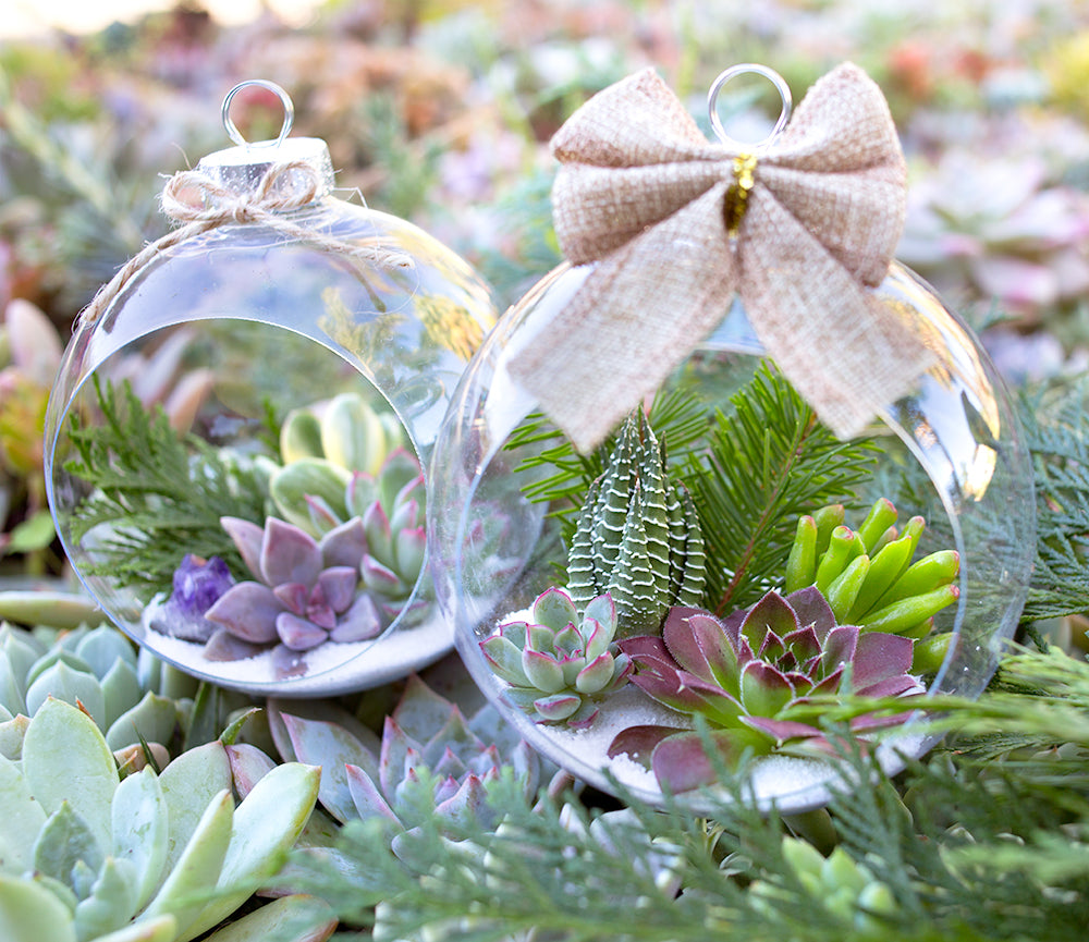 Botanical Bright - Holiday Succulent Ornament DIY Tutorial