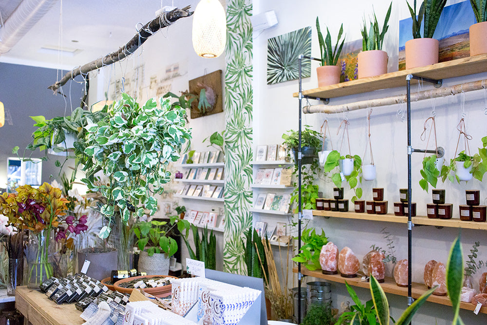 Botanical Bright - Plant Shop Review Wildflora