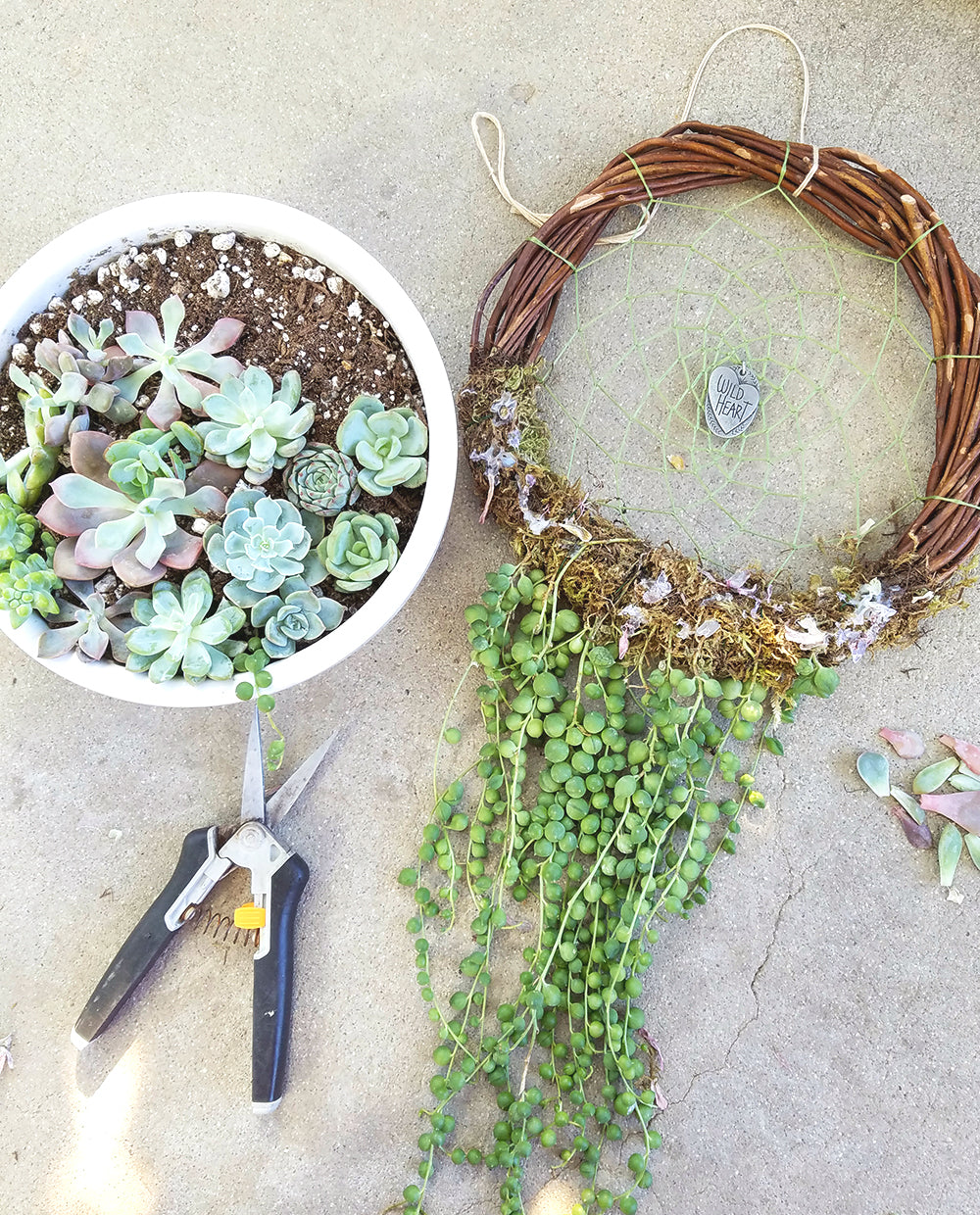 Botanical Bright - Taking Apart Your Living Succulent Dreamcatcher