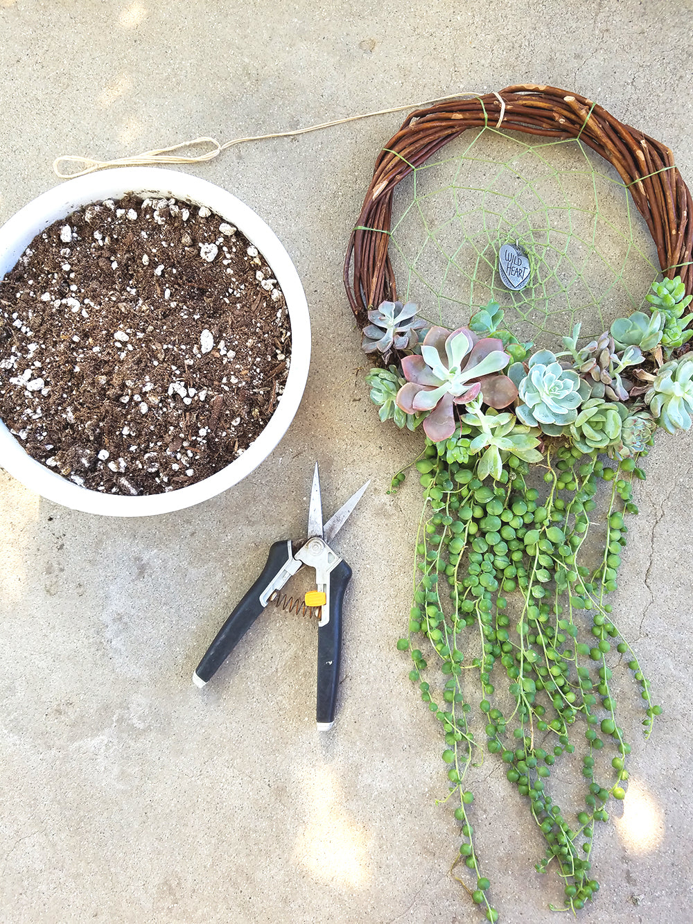 Taking Apart Your Living Succulent Dreamcatcher Botanical Bright