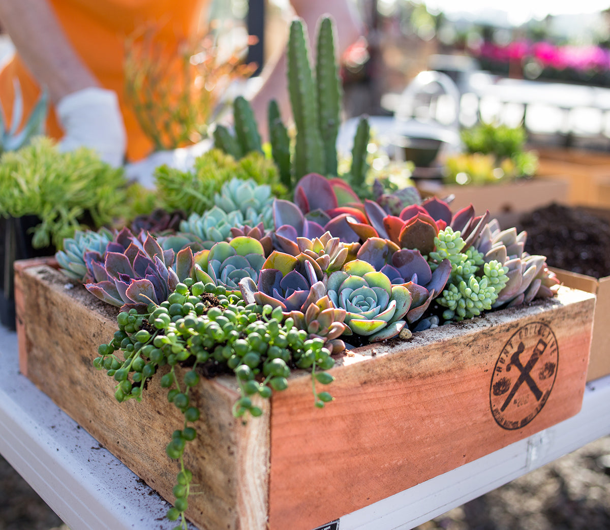 Botanical Bright - Succulent Workshop at Weidners Nursery with Mike Pyle
